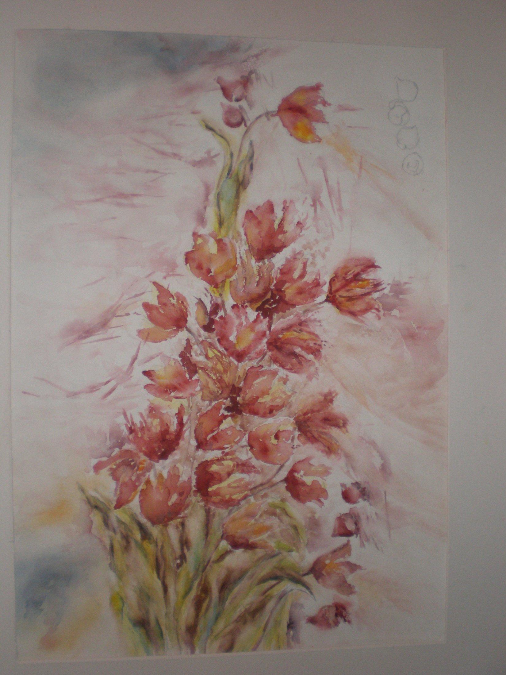 2013 - Brassée de tulipes, passage d'une saison