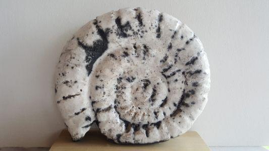 2017 - Fossile